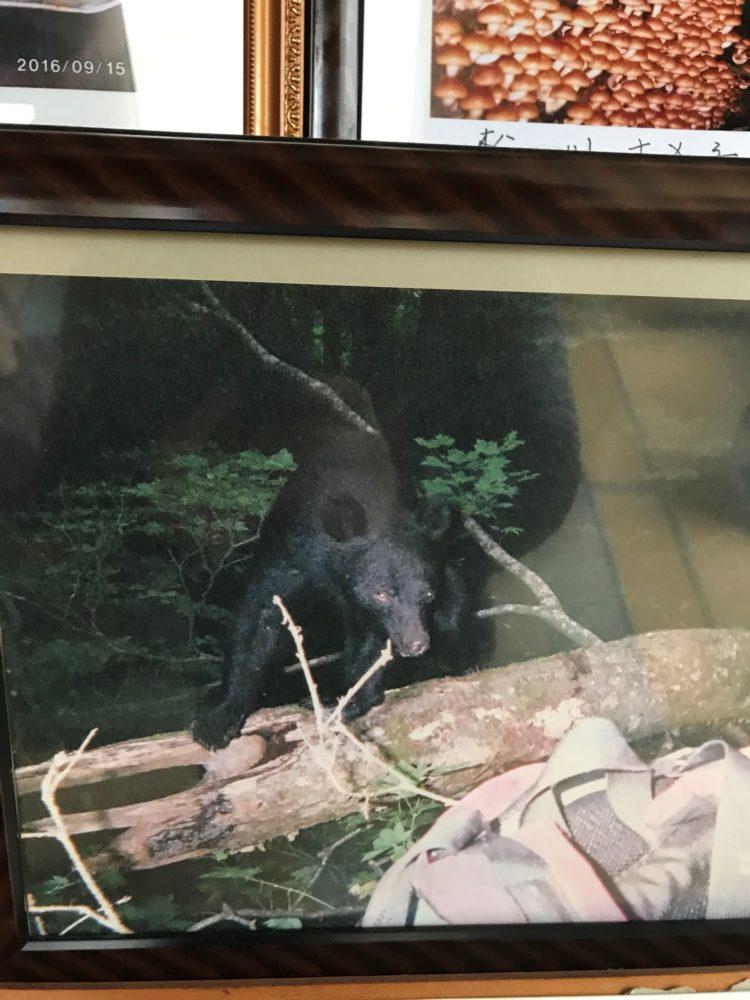 山の中で目の前に出てきた凶暴な熊の証拠写真