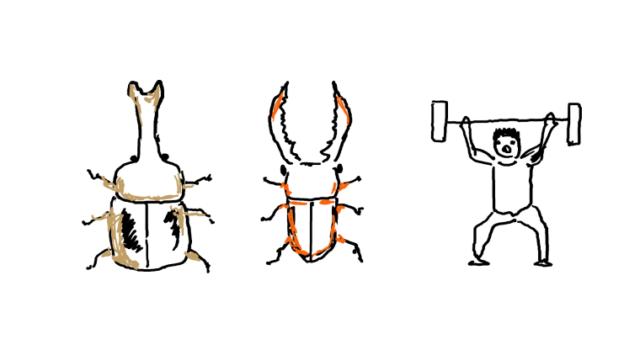 カブトムシとクワガタと筋トレ人