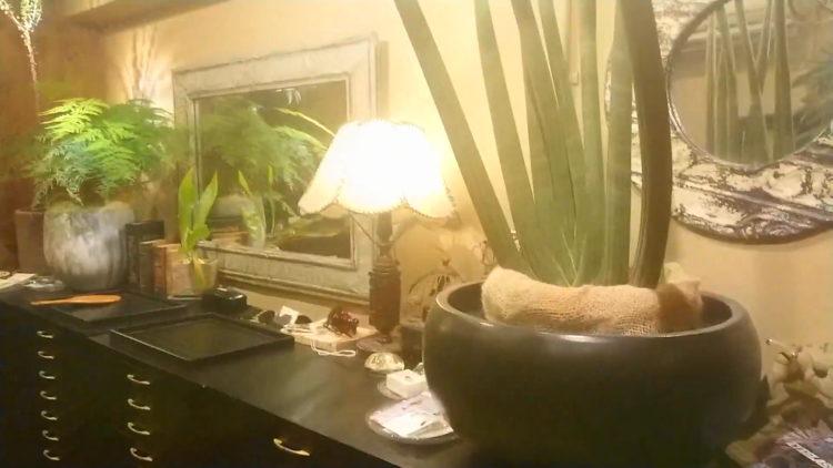 アンティークショップを思わせる落ち着いた「誠眼鏡店」銀座店内の写真。レトロな感じの音楽が流れ観葉植物がいたるところに置かれている。